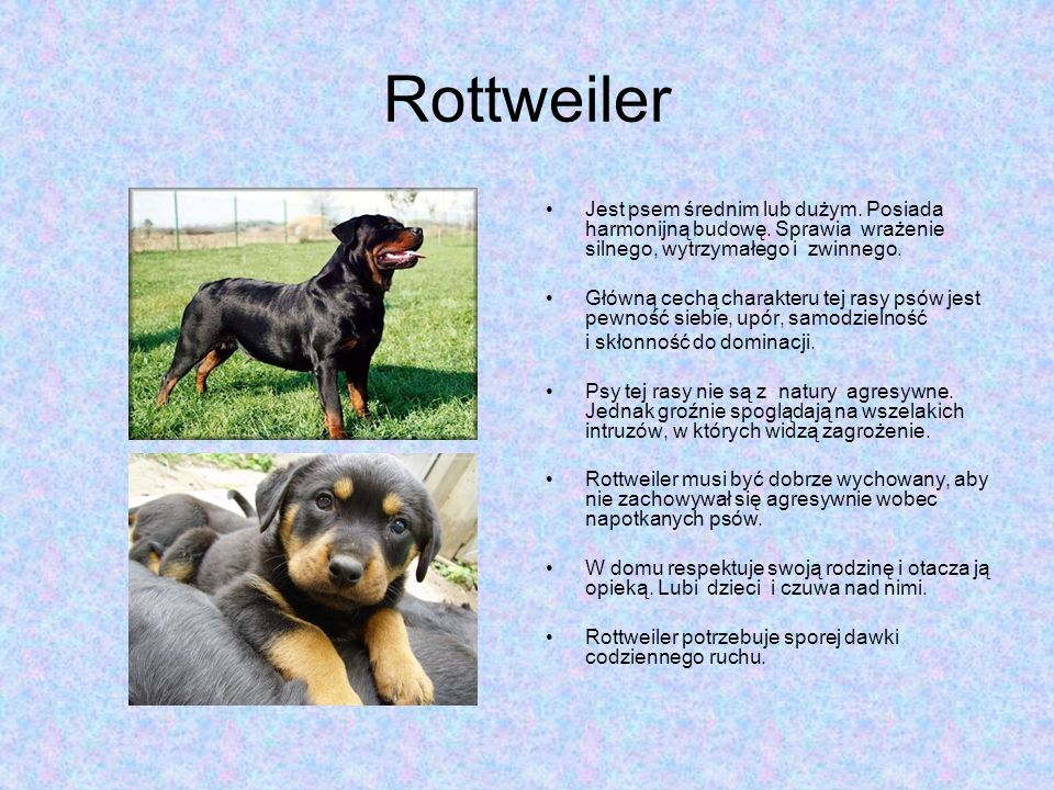Rottweiler Jest psem średnim lub dużym. Posiada harmonijną budowę. Sprawia wrażenie silnego, wytrzymałego i zwinnego.