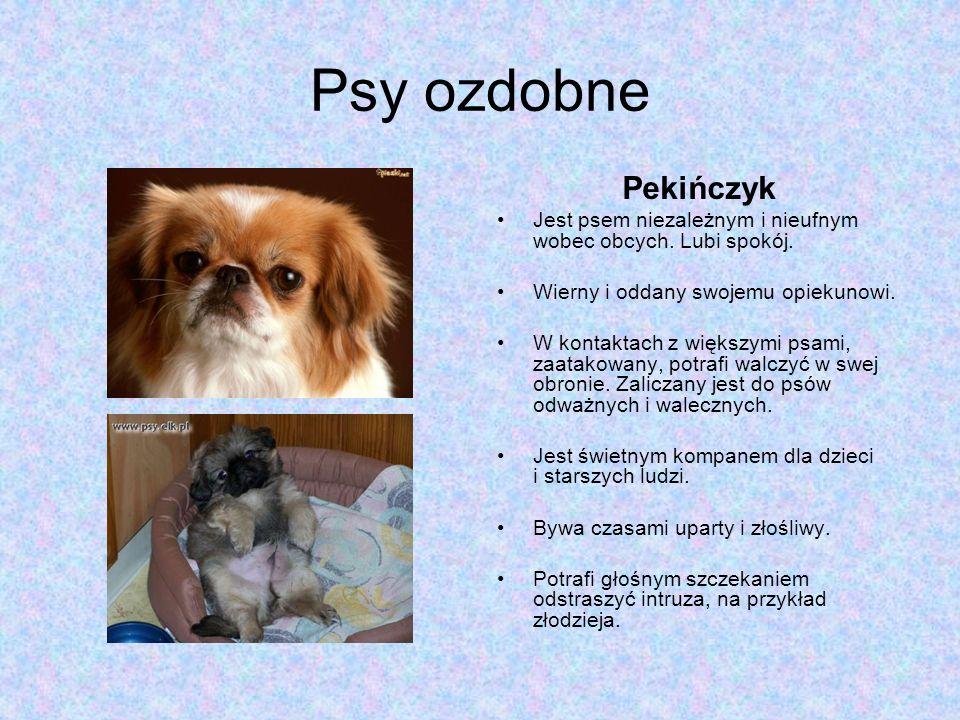 Psy ozdobne Pekińczyk. Jest psem niezależnym i nieufnym wobec obcych. Lubi spokój. Wierny i oddany swojemu opiekunowi.