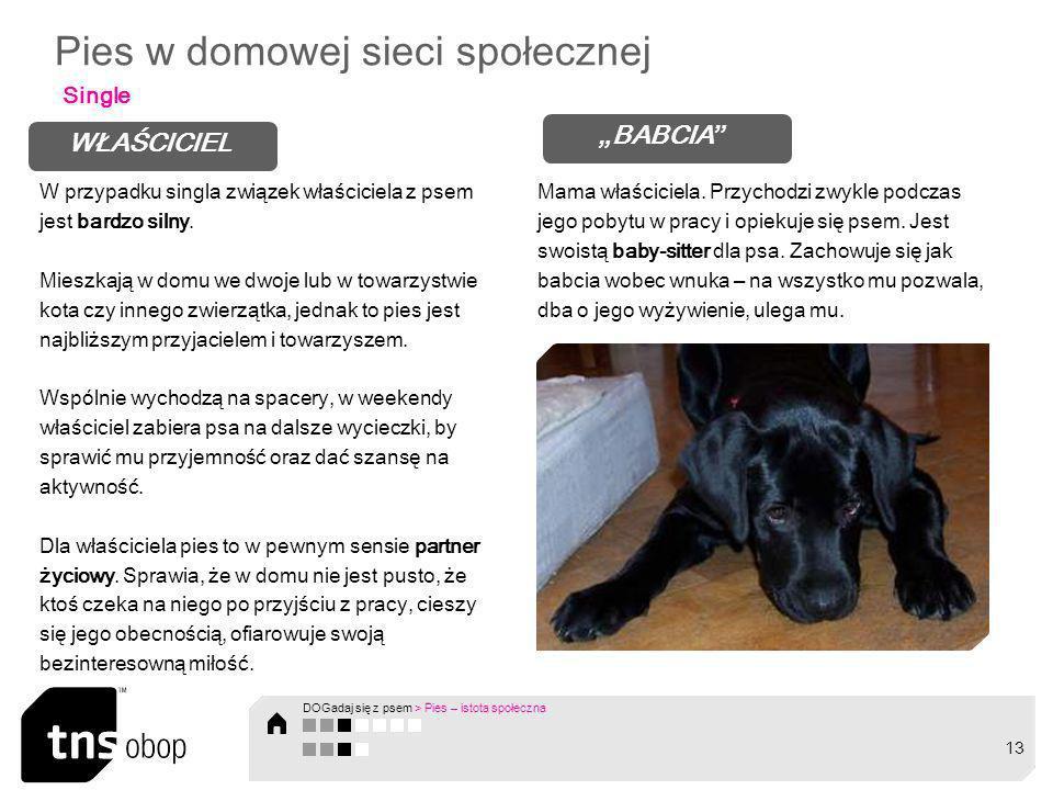 Pies w domowej sieci społecznej