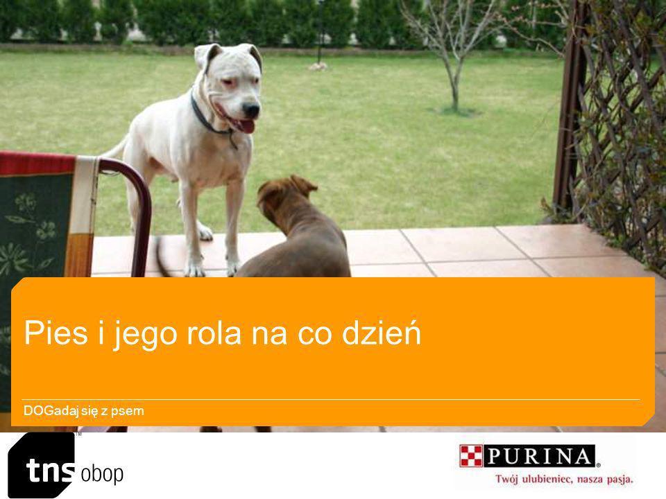Pies i jego rola na co dzień