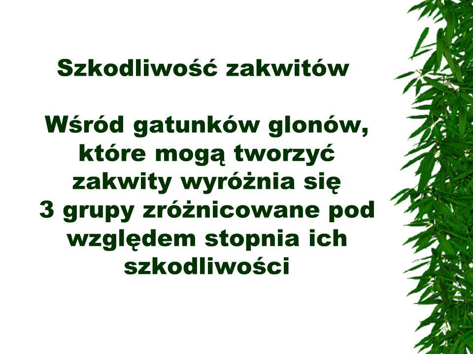 Szkodliwość zakwitów Wśród gatunków glonów, które mogą tworzyć zakwity wyróżnia się 3 grupy zróżnicowane pod względem stopnia ich szkodliwości