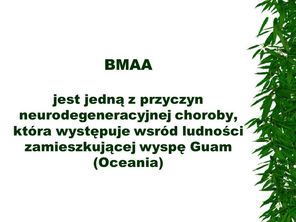 BMAA jest jedną z przyczyn neurodegeneracyjnej choroby, która występuje wsród ludności zamieszkującej wyspę Guam (Oceania)