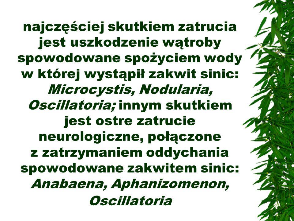najczęściej skutkiem zatrucia jest uszkodzenie wątroby spowodowane spożyciem wody w której wystąpił zakwit sinic: Microcystis, Nodularia, Oscillatoria; innym skutkiem jest ostre zatrucie neurologiczne, połączone z zatrzymaniem oddychania spowodowane zakwitem sinic: Anabaena, Aphanizomenon, Oscillatoria