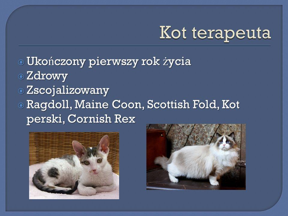 Kot terapeuta Ukończony pierwszy rok życia Zdrowy Zscojalizowany