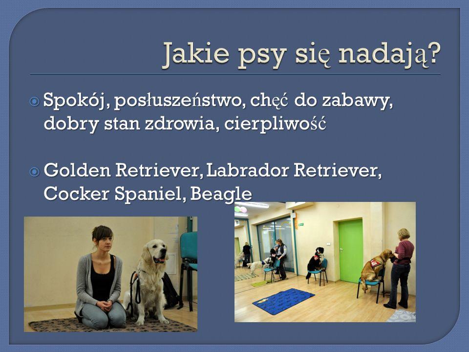 Jakie psy się nadają Spokój, posłuszeństwo, chęć do zabawy, dobry stan zdrowia, cierpliwość.