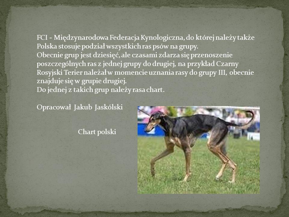 FCI - Międzynarodowa Federacja Kynologiczna, do której należy także Polska stosuje podział wszystkich ras psów na grupy.