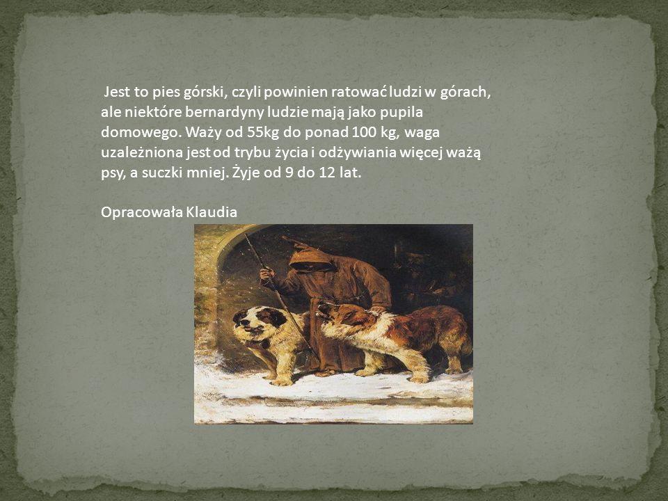 Jest to pies górski, czyli powinien ratować ludzi w górach, ale niektóre bernardyny ludzie mają jako pupila domowego. Waży od 55kg do ponad 100 kg, waga uzależniona jest od trybu życia i odżywiania więcej ważą psy, a suczki mniej. Żyje od 9 do 12 lat.
