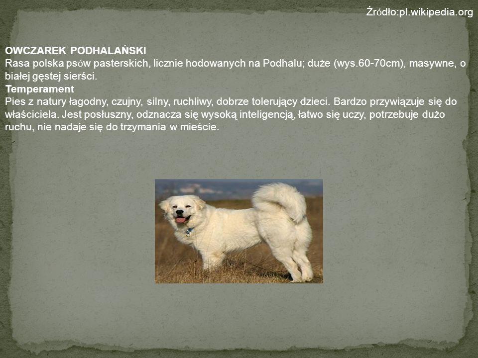 Źródło:pl.wikipedia.orgOWCZAREK PODHALAŃSKI.