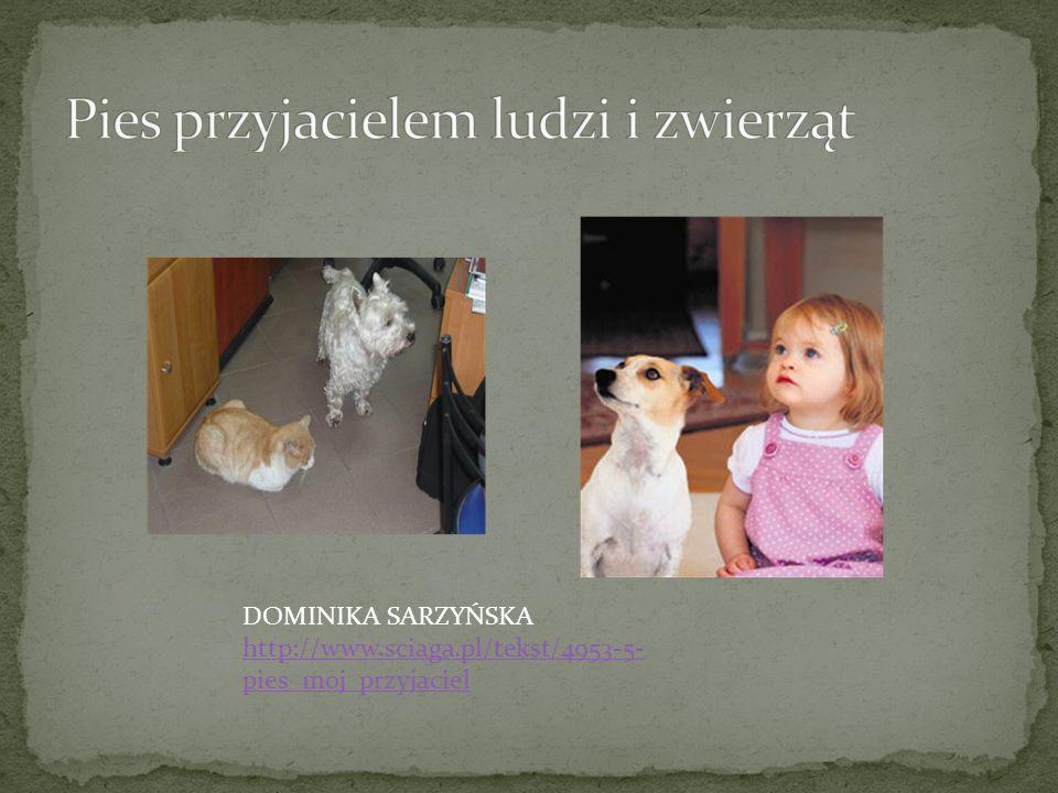 Pies przyjacielem ludzi i zwierząt