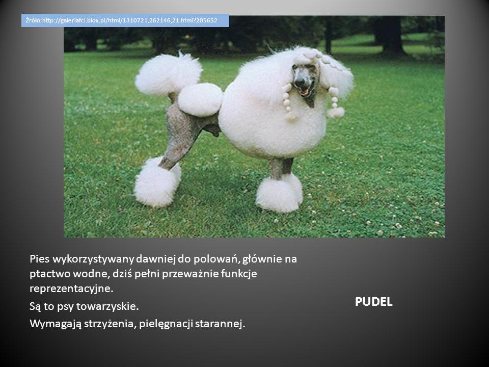 Źróło:http://galeriafci.blox.pl/html/1310721,262146,21.html 205652