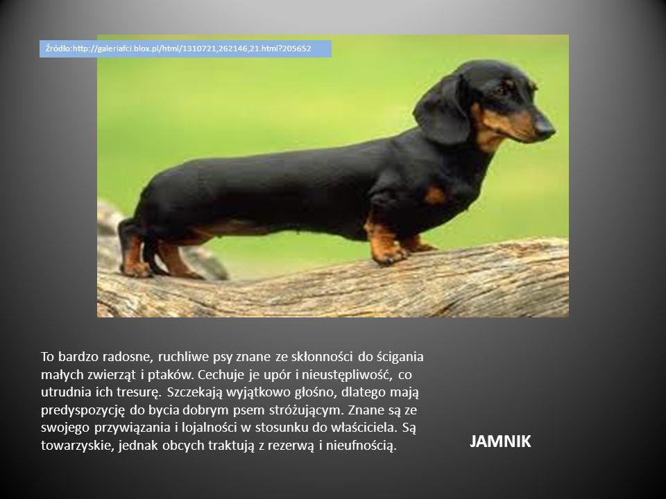 Źródło:http://galeriafci.blox.pl/html/1310721,262146,21.html 205652