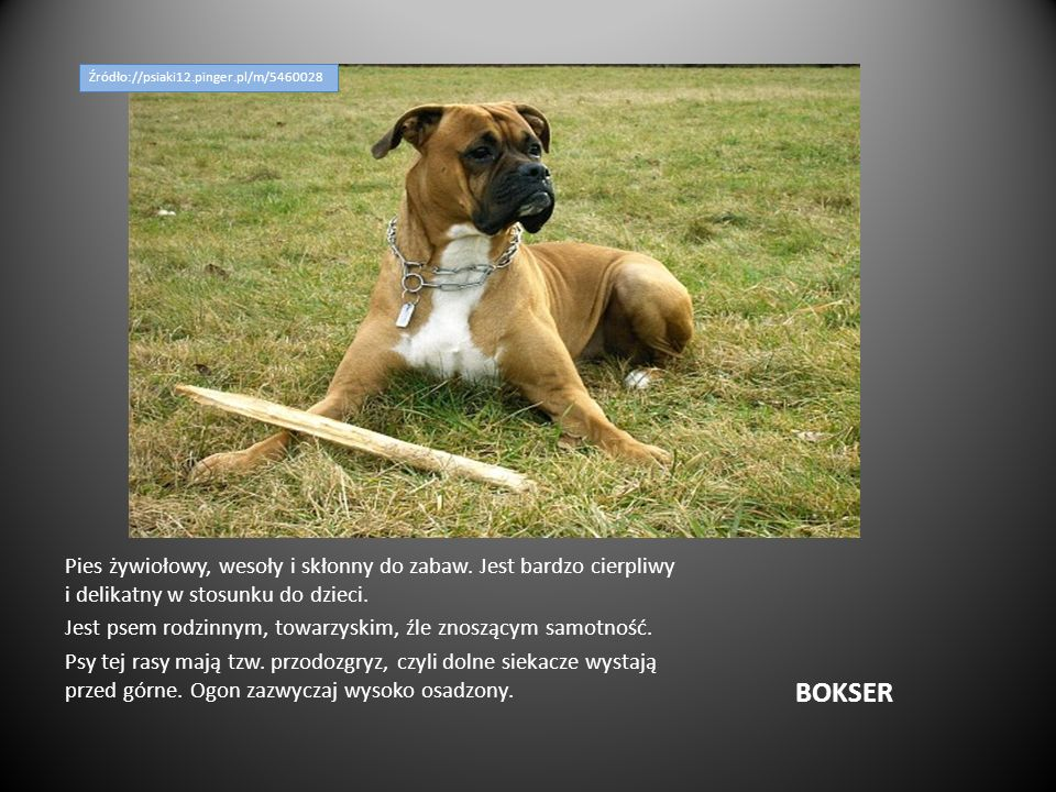 Źródło://psiaki12.pinger.pl/m/5460028