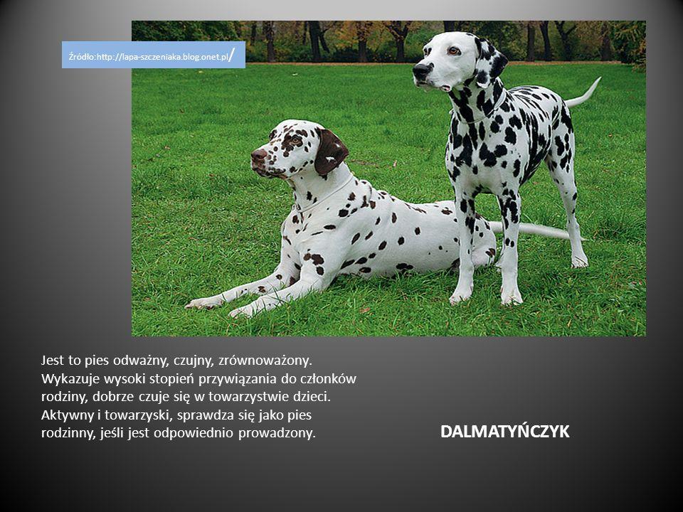 Źródło:http://lapa-szczeniaka.blog.onet.pl/
