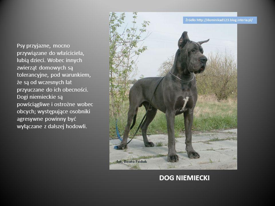 Źródło:http://dominikad123.blog.interia.pl/