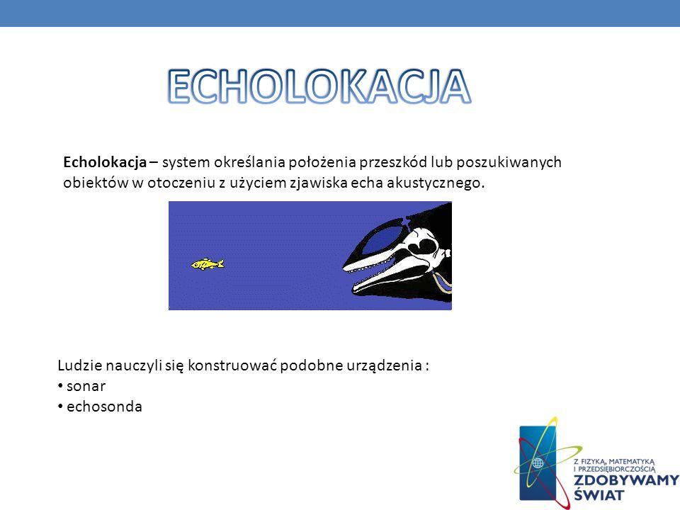 ECHOLOKACJA Echolokacja – system określania położenia przeszkód lub poszukiwanych obiektów w otoczeniu z użyciem zjawiska echa akustycznego.