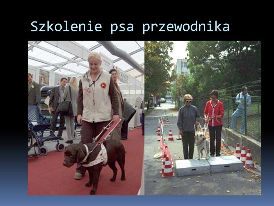 Szkolenie psa przewodnika