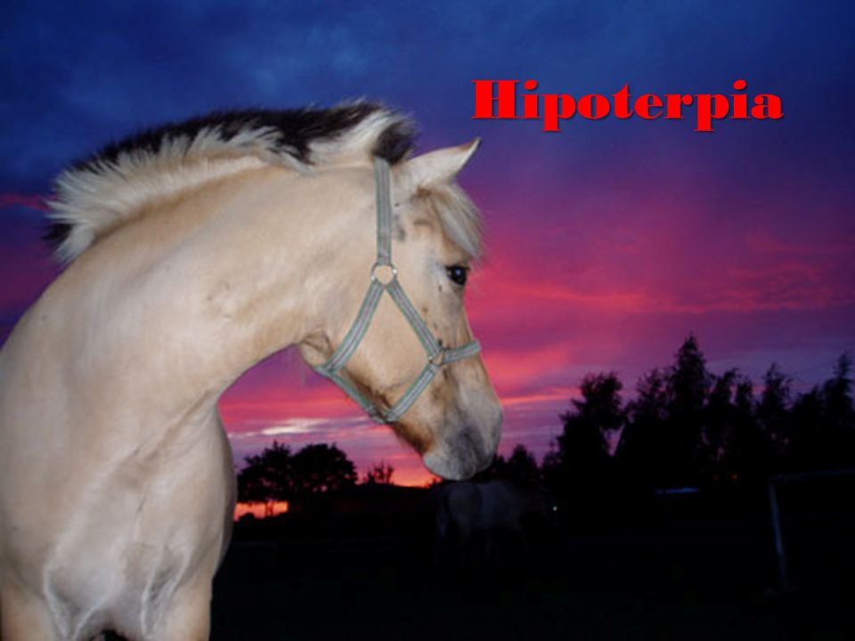 Hipoterpia