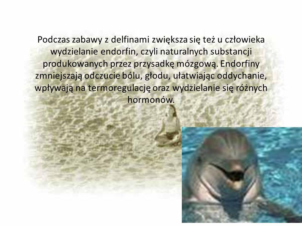 Podczas zabawy z delfinami zwiększa się też u człowieka wydzielanie endorfin, czyli naturalnych substancji produkowanych przez przysadkę mózgową.