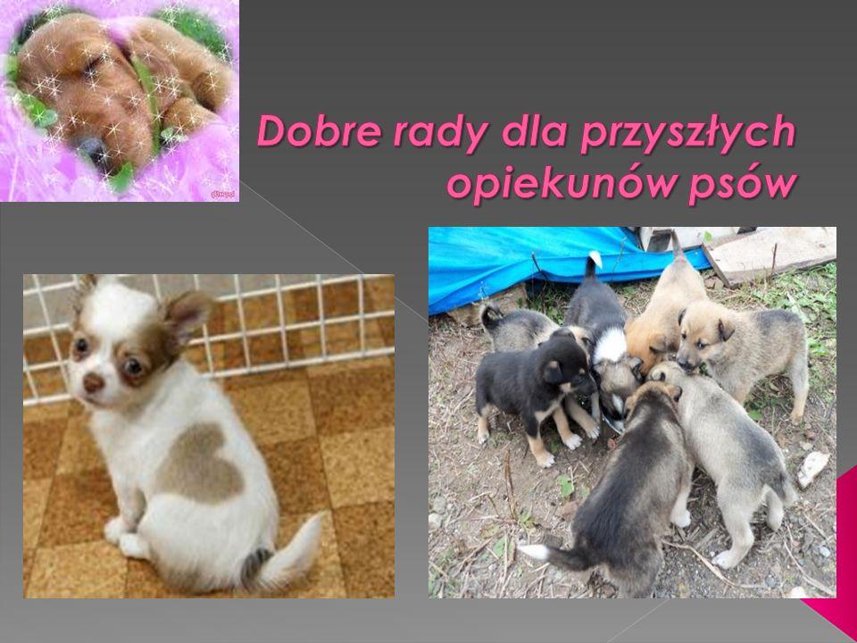 Dobre rady dla przyszłych opiekunów psów