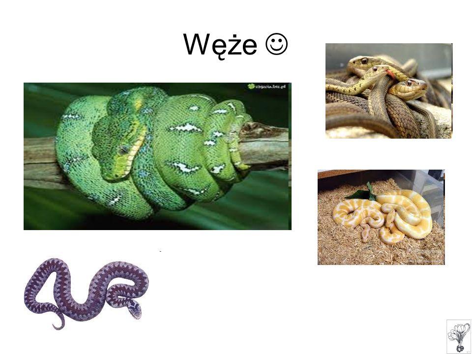 Węże 