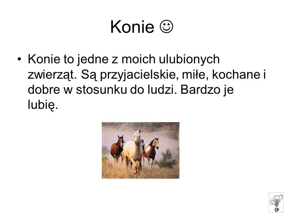 Konie  Konie to jedne z moich ulubionych zwierząt.