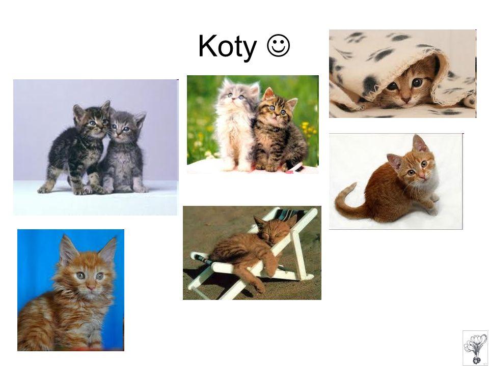 Koty 