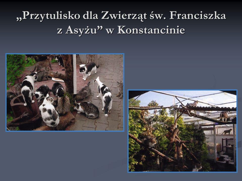 """""""Przytulisko dla Zwierząt św. Franciszka z Asyżu w Konstancinie"""