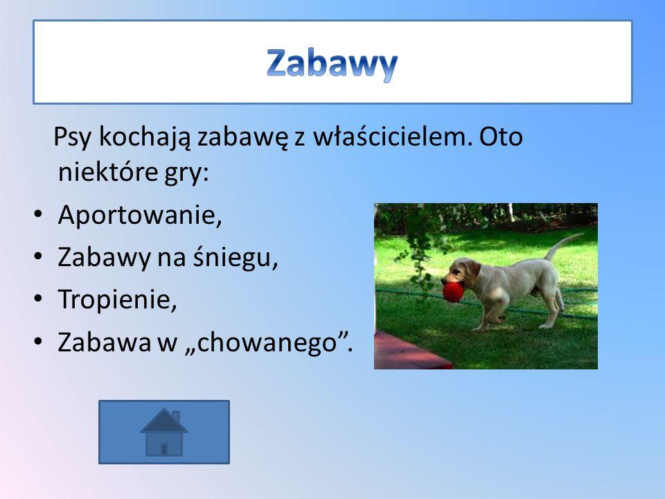 Zabawy Psy kochają zabawę z właścicielem. Oto niektóre gry: