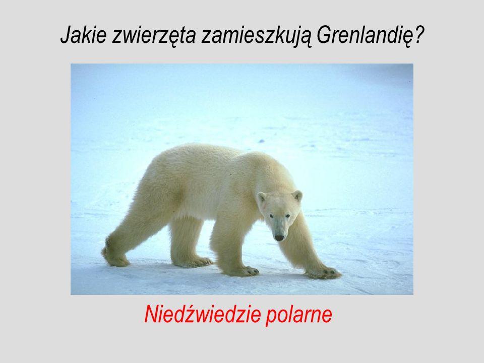 Jakie zwierzęta zamieszkują Grenlandię
