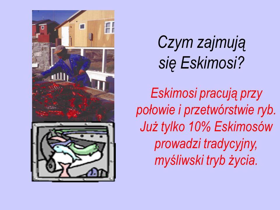 Czym zajmują się Eskimosi
