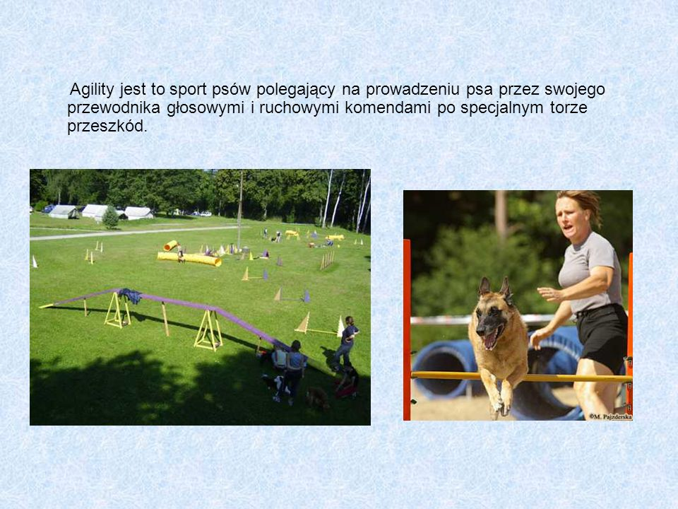 Agility jest to sport psów polegający na prowadzeniu psa przez swojego przewodnika głosowymi i ruchowymi komendami po specjalnym torze przeszkód.