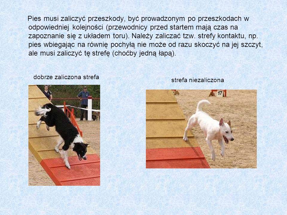 Pies musi zaliczyć przeszkody, być prowadzonym po przeszkodach w odpowiedniej kolejności (przewodnicy przed startem mają czas na zapoznanie się z układem toru). Należy zaliczać tzw. strefy kontaktu, np. pies wbiegając na równię pochyłą nie może od razu skoczyć na jej szczyt, ale musi zaliczyć tę strefę (choćby jedną łapą).