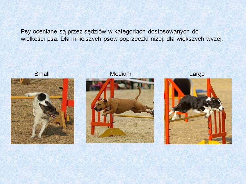 Psy oceniane są przez sędziów w kategoriach dostosowanych do wielkości psa. Dla mniejszych psów poprzeczki niżej, dla większych wyżej.