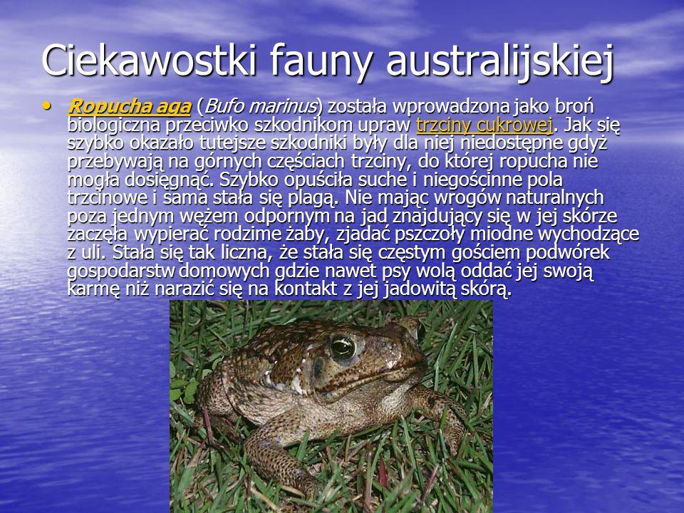 Ciekawostki fauny australijskiej