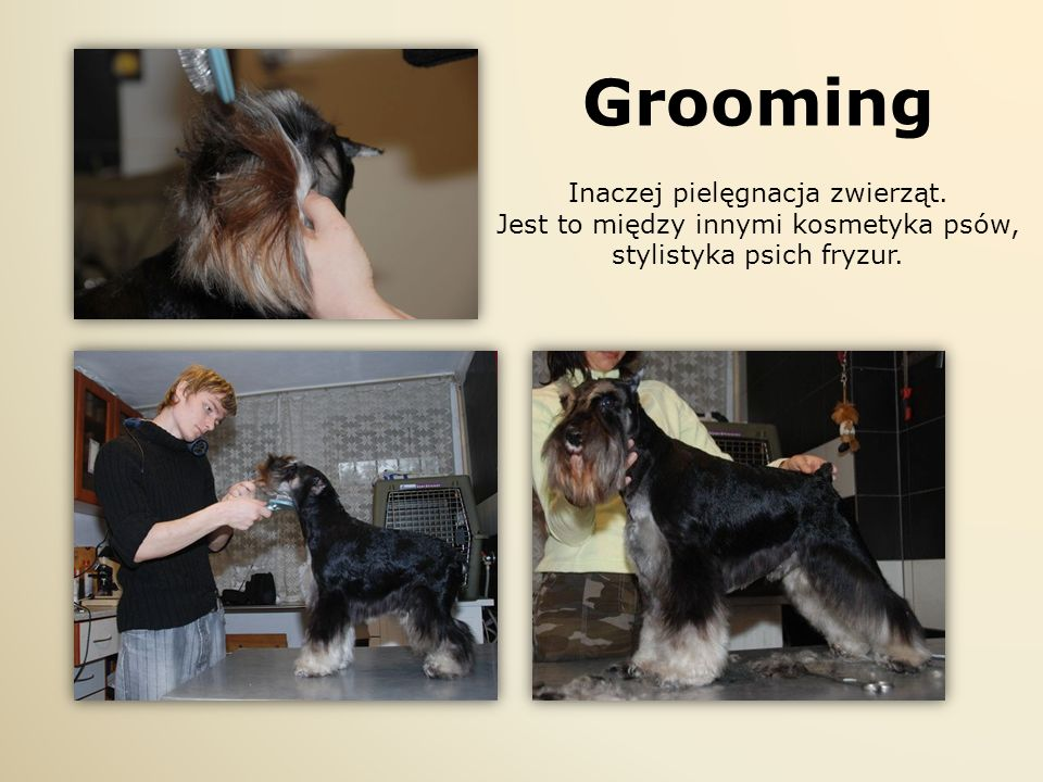 Grooming Inaczej pielęgnacja zwierząt.