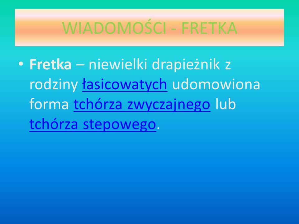 WIADOMOŚCI - FRETKA Fretka – niewielki drapieżnik z rodziny łasicowatych udomowiona forma tchórza zwyczajnego lub tchórza stepowego.
