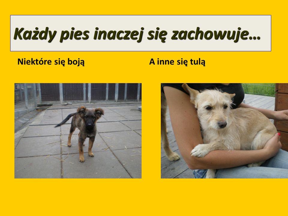Każdy pies inaczej się zachowuje…