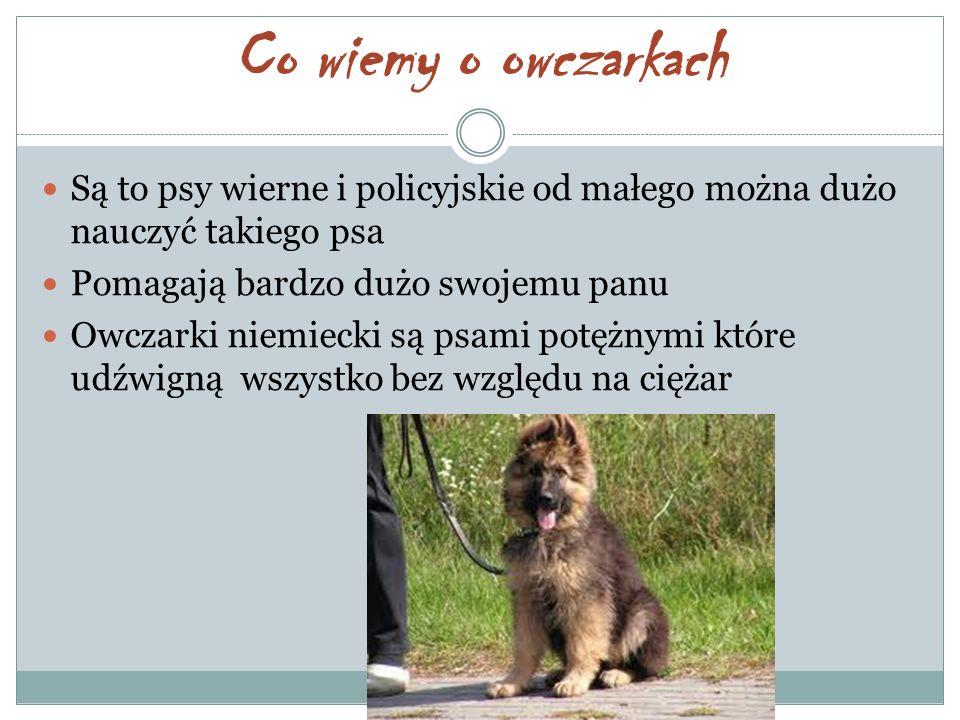 Co wiemy o owczarkach Są to psy wierne i policyjskie od małego można dużo nauczyć takiego psa. Pomagają bardzo dużo swojemu panu.