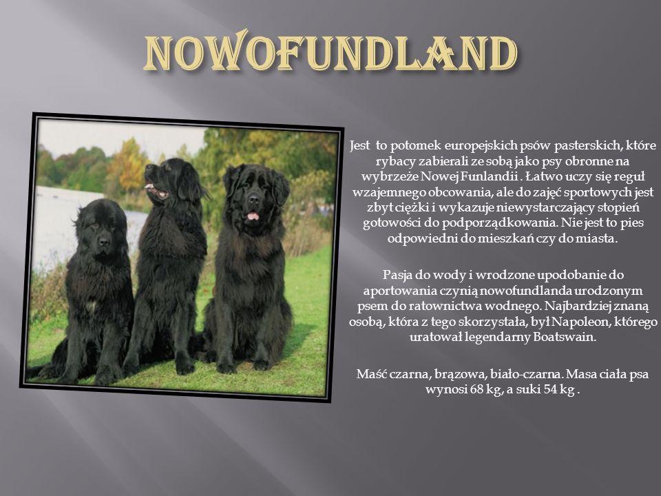 Nowofundland