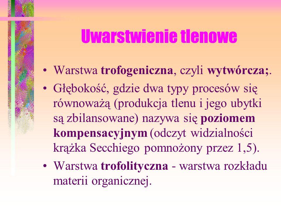Uwarstwienie tlenowe Warstwa trofogeniczna, czyli wytwórcza;.