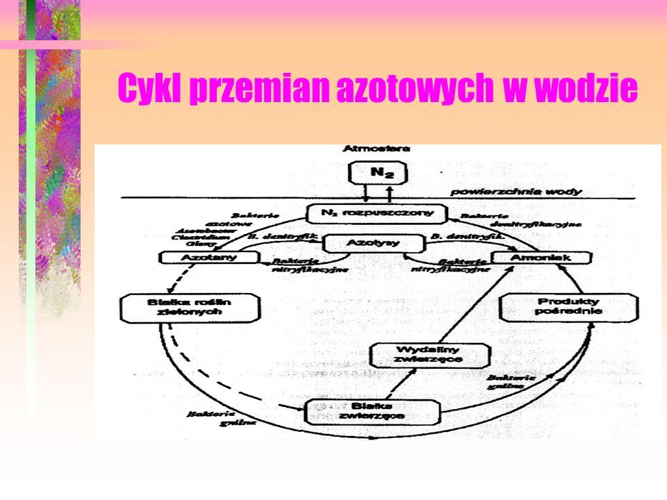 Cykl przemian azotowych w wodzie