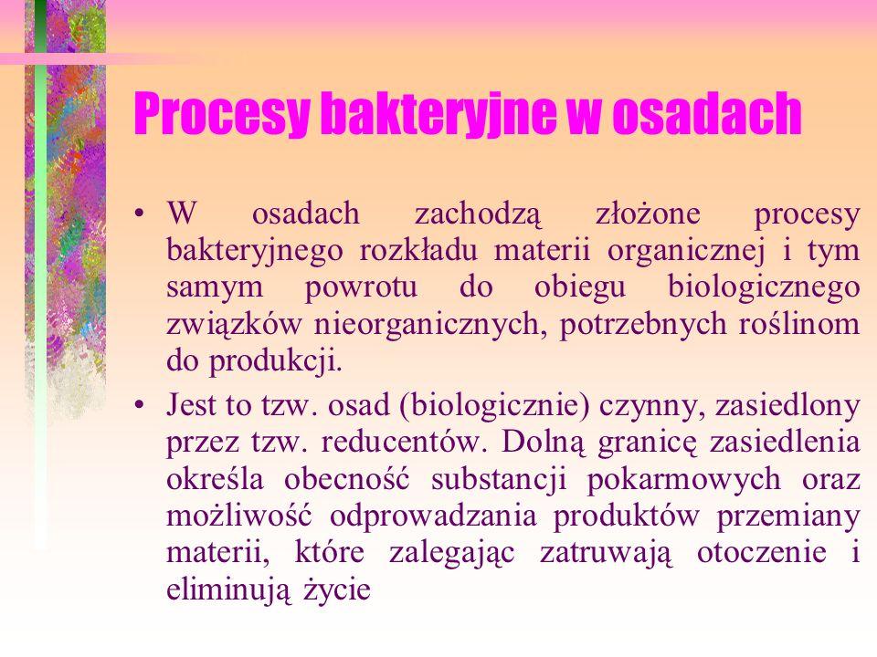 Procesy bakteryjne w osadach