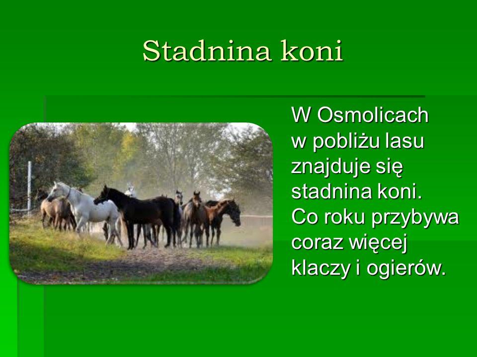 Stadnina koni W Osmolicach w pobliżu lasu znajduje się stadnina koni.