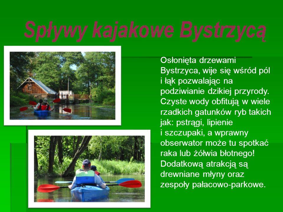 Osłonięta drzewami Bystrzyca, wije się wśród pól i łąk pozwalając na podziwianie dzikiej przyrody.