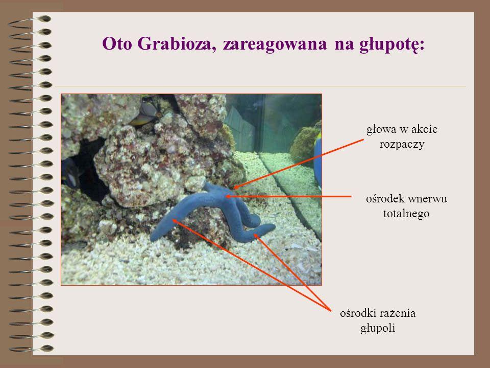 Oto Grabioza, zareagowana na głupotę: