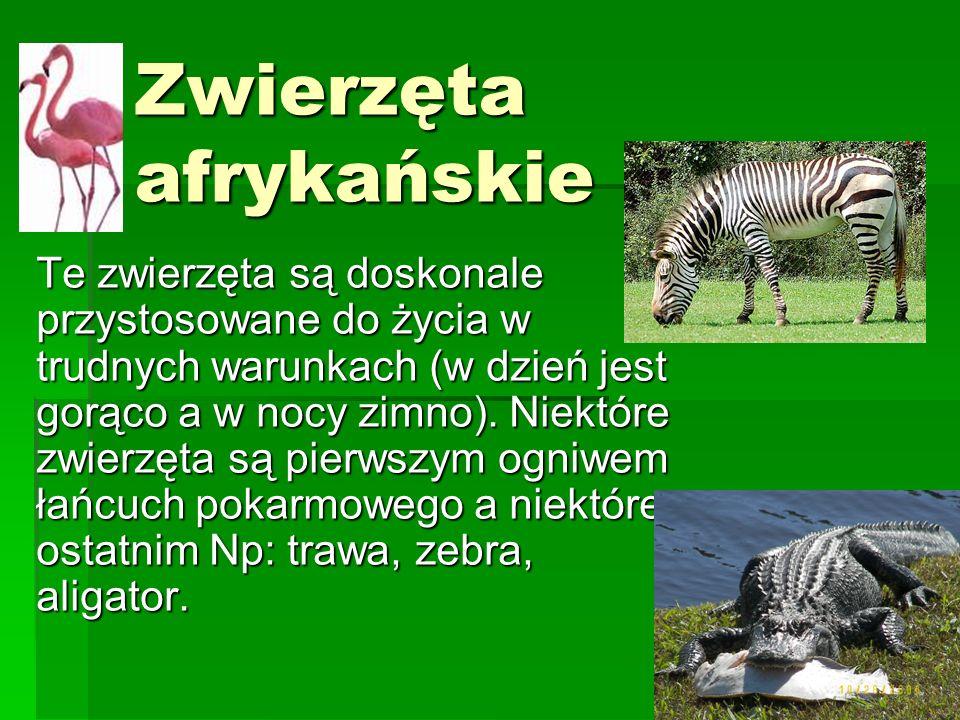 Zwierzęta afrykańskie