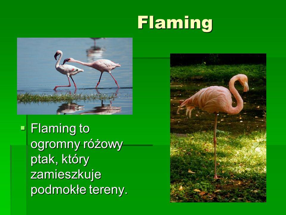 Flaming Flaming to ogromny różowy ptak, który zamieszkuje podmokłe tereny.