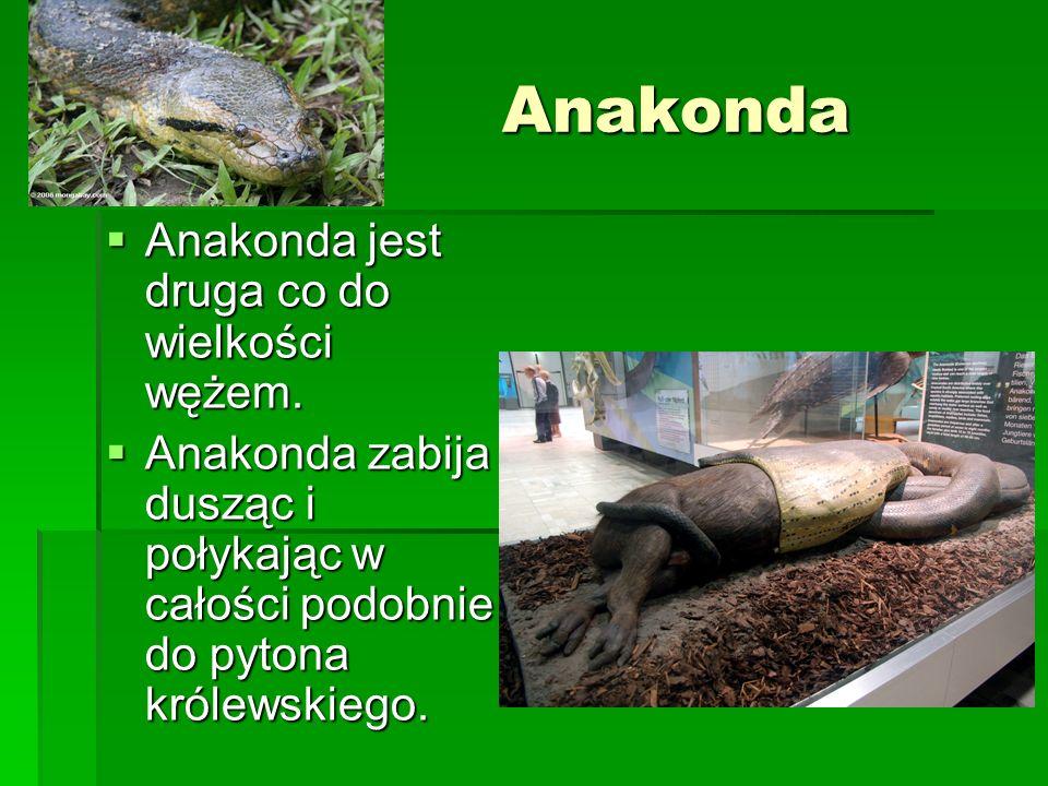 Anakonda Anakonda jest druga co do wielkości wężem.