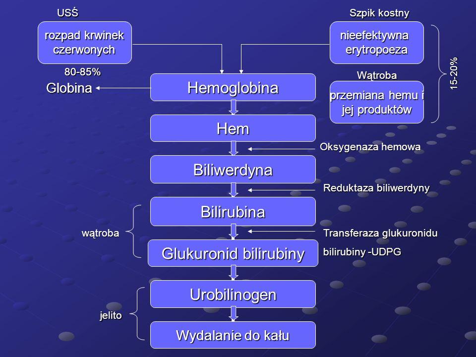 Globina rozpad krwinek czerwonych przemiana hemu i jej produktów