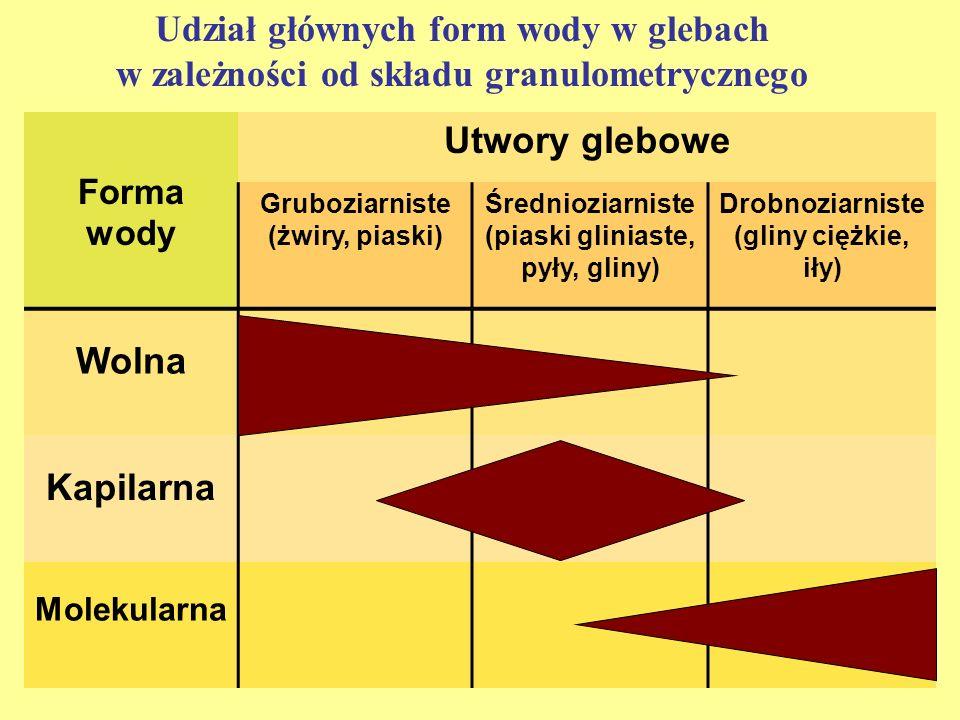 Udział głównych form wody w glebach